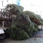 3-gorlitz-weihnachtsbaum-foto-wehnert-1